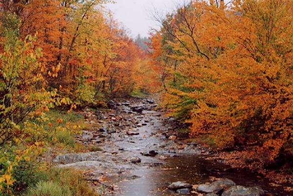 Autumn river picture
